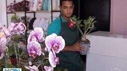 Primeiro salão de orquídea nativa do Norte de Minas é realizado em Montes Claros