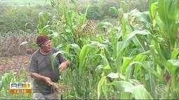 Chuvas são resgistradas no Agreste e Sertão de Pernambuco