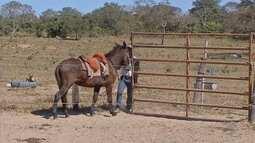 Como fazer o casqueamento em cavalos