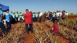 Feira reúne produtores de abacaxi em Frutal