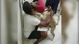 Morador de rua brinca com seu cachorro que foi atacado por um pitbull
