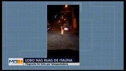 Moradora registra lobo-guará correndo pelas ruas de Itaúna