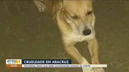 Moradores de Aracruz, ES, dizem que animais estão sendo envenenados na cidade