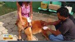 Nova Venécia, ES, tem dia de vacinação contra a raiva para animais domésticos
