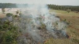 Área de reflorestamento pega fogo em Taquarituba