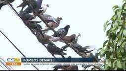 Moradores de Cachoeiro temem contrair doenças causadas por pombos, no Sul do ES