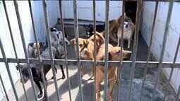 Giro Rural mostra ações de conscientização sobre doação de animais em Juiz de Fora