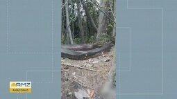Pescador flagra cobra anaconda gigante na floresta amazônica; veja vídeo