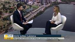 Especialista fala sobre peste suína clássica; dois casos foram registrados em Alagoas
