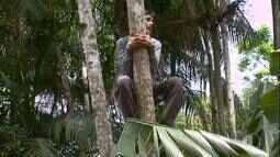 O Pedro encontrou no fruto da Árvore da juçara a fonte de renda da sua família