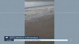 Caravelas Portuguesas são vistas em praias do Vale do Ribeira