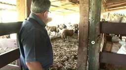 Agricultores têm prejuízos com furtos de animais