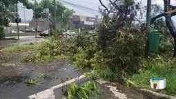 Temporal derruba árvores em São José dos Campos