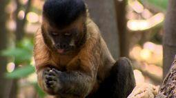 Macacos inteligentes