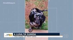 Dono procura cadela desaparecida em Goiânia