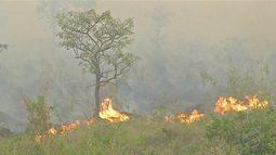 Fogo destrói mais de 20% do Pantanal