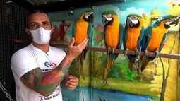 Empresário transformar a própria casa em um centro de reabilitação para aves
