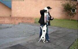 O cachorro e o skate, enviado por Guilherme Abe