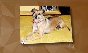 'Houve, sim, um equívoco', diz diretor da TAM sobre sumiço de cachorrinha