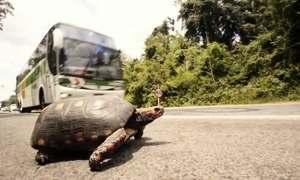 Quinze animais silvestres morrem atropelados em estradas por segundo