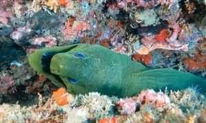 Praias de Guarapari (ES) abrigam biodiversidade