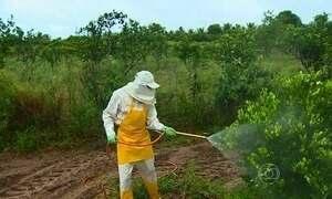 Pesquisadores alertam: agrotóxicos podem causar doenças como câncer