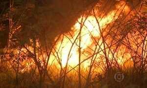 Brasil já tem mais de 13 mil focos de queimada por causa do tempo seco