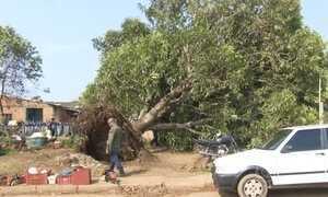 Tempestade em Porto Velho derruba postes e árvores