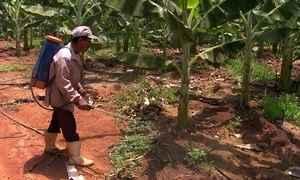 Profissão Repórter - Agrotóxicos - 03/11/2015