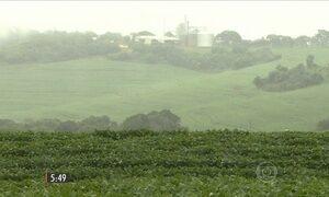Alta do dólar melhora o preço do milho e da soja para produtores do PR