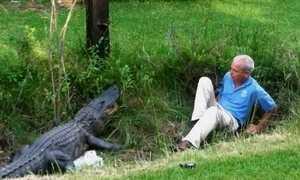 Saiba como escapar do ataque de crocodilo