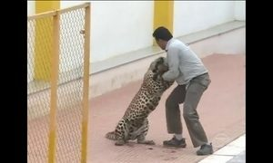 Imagens mostram leopardo atacando homem em escola no sul da Índia