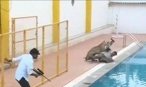 Leopardo entra em escola na Índia e deixa seis pessoas feridas