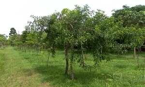 Homem planta sozinho 18 mil árvores e cria primeiro parque linear de SP
