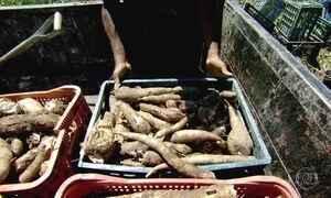 Produção de alimentos orgânicos avança na contramão da crise