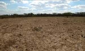 Seca e queimadas transformam um terço da caatinga em deserto