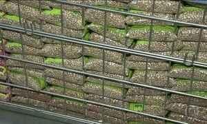 Preço do feijão dispara e governo quer aumentar importação