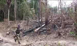 Desmatamento na Amazônia avança de forma preocupante