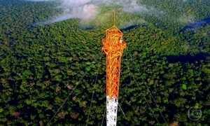 Torres gigantes na Amazônia captam informações sobre o clima