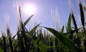 Previsão da Conab é de novo recorde na produção de grãos