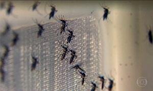 Pesquisadores alertam para o combate ao Aedes aegypti