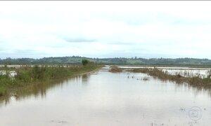 Excesso de chuvas afeta plantio de arroz no Rio Grande do Sul