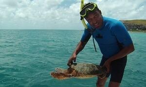 Hoje é dia de Abrolhos: tartarugas-marinhas