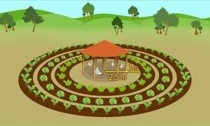 Produção com horta e galinheiro aumenta renda de agricultores no RJ