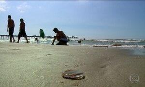 Águas-vivas atacam 6.600 banhistas em Santa Catarina no fim de semana
