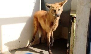 Hospital ajuda a preservar animais silvestres
