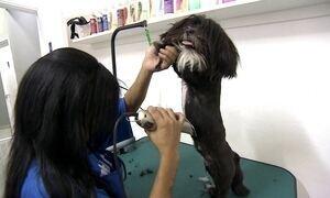 Curso profissionalizante ensina como dar banho e tosar cachorros e gatos