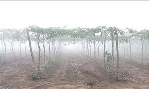 Fiéis pedem a São José chuva para encher reservatórios no Ceará