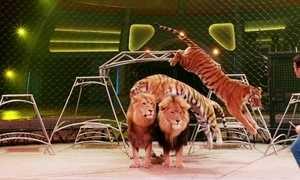 Circo americano Ringling Brothers faz última apresentação, após 146 anos