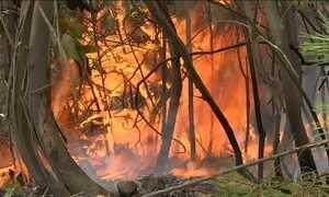 Mais de mil bombeiros combatem fogo em vegetação em Portugal